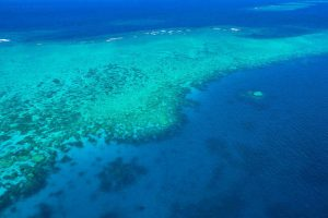 great barrier reef