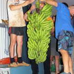 Innisfail & District Show - Banana Exhibit