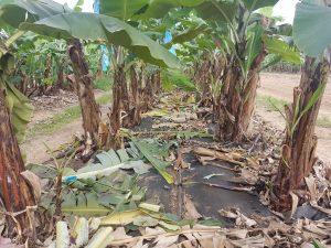 Soil stabiliser
