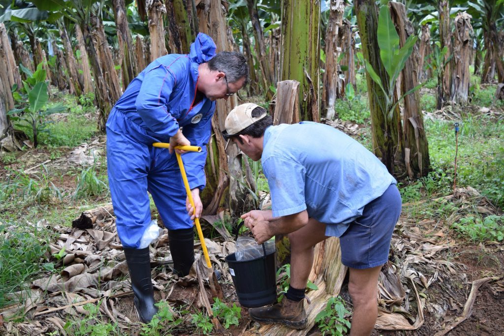 Dr Paul Dennis (the University of Queensland) and Paul DeBrincat (LMB Nerada) sample soils and banana plants to determine their microbiomes