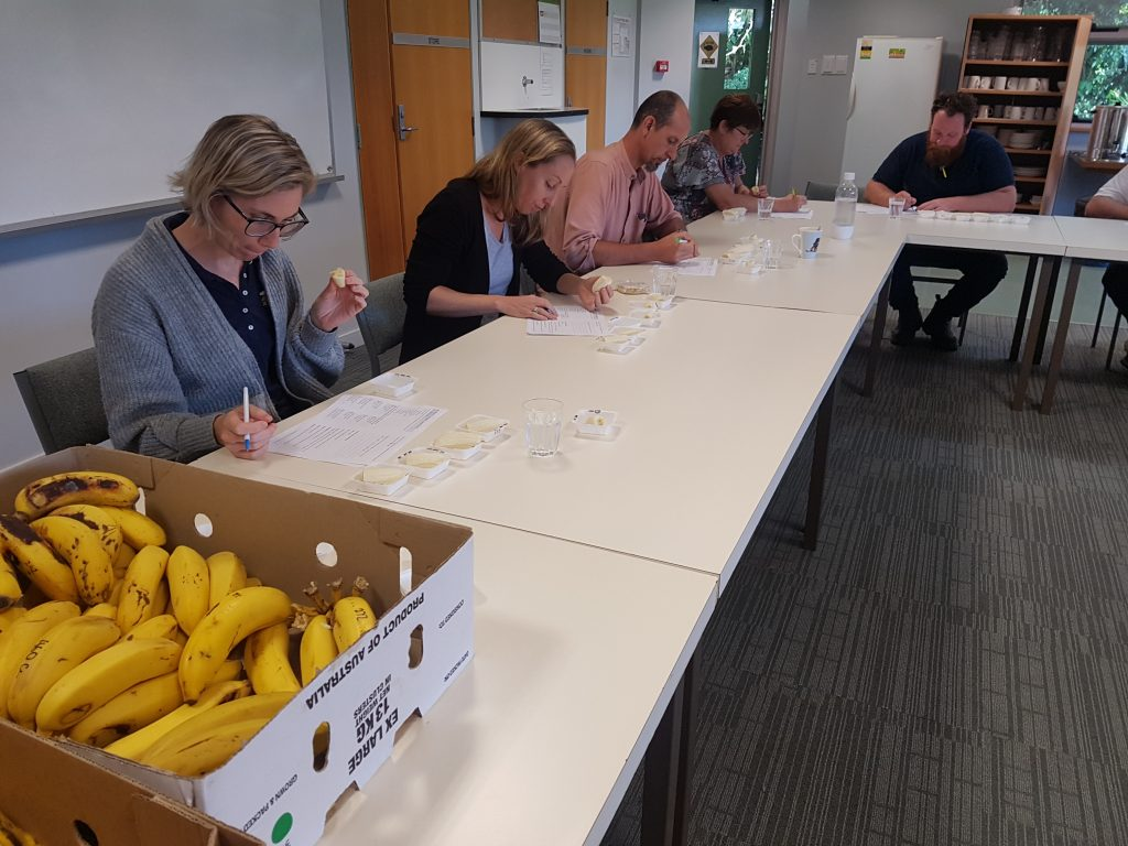 Volunteer taste-testers at the South Johnstone Research Station answering a questionnaire to assist with the selection of elite varieties.
