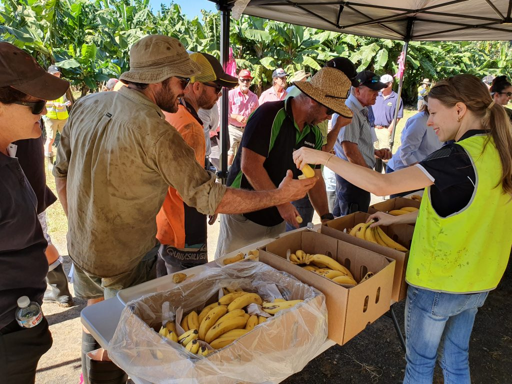 Those attending the field walk at South Johnstone research station were able to taste test some of the 32 different varieties currently being trialled for disease resistance.