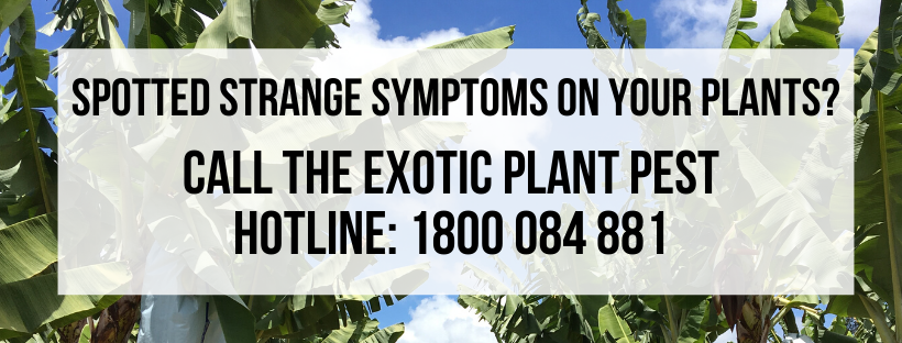 Spotted strange symptoms on your plants_